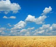 Weizen und Himmel Lizenzfreies Stockfoto