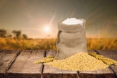 Weizen und Mehl Lizenzfreie Stockfotografie