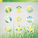 Weizen und Roggen. Vektorzeichen-Schablonenset. Lizenzfreie Stockfotografie