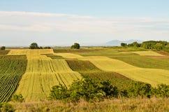 Weizen und Sonnenblumenfelder Stockfotografie