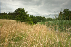 Weizen und Wiese auf polnischen Pommern Lizenzfreie Stockfotografie