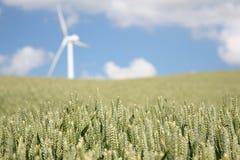 Weizen- und Windturbine Stockbild