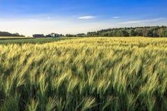 Weizenbauernhof Lizenzfreies Stockbild
