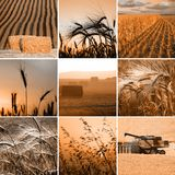 Weizencollage stockfotos
