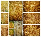 Weizencollage Stockfotografie