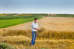 Weizenernte lizenzfreies stockbild