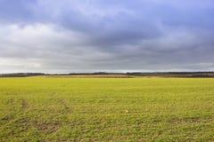 Weizenernte und drastischer Himmel Stockfotografie