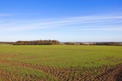 Weizenernte und -Windkraftanlage Lizenzfreies Stockfoto