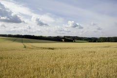 Weizenfeld an einem bewölkten Tag in Rugen-Insel, Deutschland lizenzfreie stockfotos