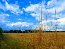 Weizenfeld an einem Sommertag lizenzfreies stockbild