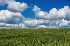 Weizenfeld gegen blauen Himmel mit weißen Wolken Die Landwirtschaft scen Stockbild