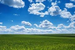 Weizenfeld gegen blauen Himmel mit weißen Wolken Die Landwirtschaft scen Lizenzfreie Stockfotos