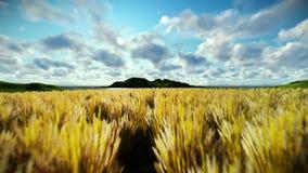 Weizenfeld gegen schönen timelapse Morgen, Kamerafliege stock footage