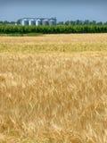 Weizenfeld im Frühjahr und Silo Stockbilder
