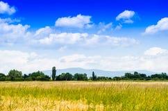 Weizenfeld im Sommer Stockbild