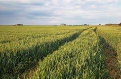 Weizenfeld im Sommer Lizenzfreies Stockbild