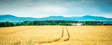Weizenfeld mit Bergen auf dem Hintergrund Lizenzfreie Stockbilder