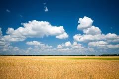 Weizenfeld mit blauem Himmel lizenzfreie stockfotografie