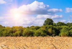 Weizenfeld mit blauem Himmel mit Sonne und Wolken Lizenzfreie Stockfotografie
