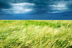 Weizenfeld mit stürmischem Himmel Lizenzfreies Stockbild