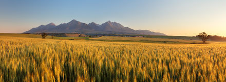 Weizenfeld mit Weg unter Tatras Lizenzfreie Stockbilder