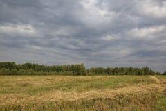 Weizenfeld nach dem Ernten und stürmischem Himmel Lizenzfreie Stockbilder