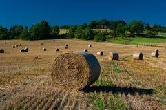 Weizenfeld nach Ernte Stockfotografie