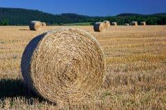 Weizenfeld nach Ernte Stockfotos