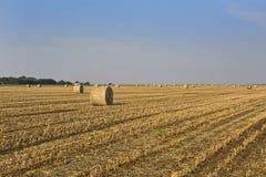 Weizenfeld nach Ernte lizenzfreies stockfoto
