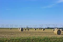 Weizenfeld nach Ernte stockbild