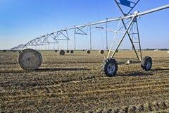 Weizenfeld nach Ernte stockbilder
