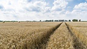 Weizenfeld nach Ernte und vorher mit runden Strohballen in der Wiese auf Ackerland Lizenzfreie Stockbilder