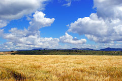 Weizenfeld nahe bei den Bergen und ein blauer Himmel mit Wolkenhintergrund Lizenzfreies Stockbild