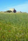 Weizenfeld nahe Dingli, Malta Lizenzfreie Stockfotos
