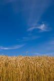 Weizenfeld am Sommer Stockbilder