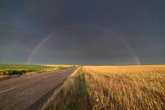 Weizenfeld am sonnigen Sommertag nach Regen und Regenbogen hinten Stockfotos