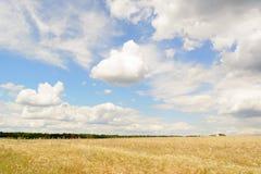 Weizenfeld und blauer Himmel mit Wolken Stockfotografie
