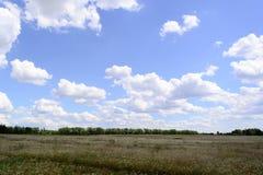 Weizenfeld und blauer Himmel mit Wolken Lizenzfreie Stockfotografie