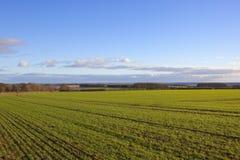 Weizenfeld und das Tal von York Lizenzfreies Stockfoto