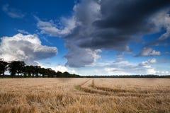 Weizenfeld und drastischer Himmel Stockfotografie