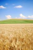 Weizenfeld und jenseits Stockbild