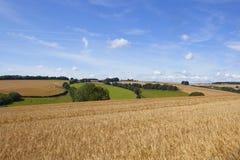 Weizenfeld und Landschaft Stockbilder