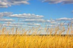 Weizenfeld und -sonne mit blauem Himmel Lizenzfreies Stockfoto