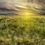 Weizenfeld und Sonnenuntergang Lizenzfreies Stockfoto