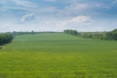 Weizenfeld unter dem blauen Himmel Lizenzfreie Stockbilder