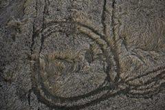 Weizenfeld von oben Stockfotos