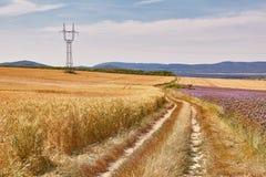 Weizenfelddetail Stockfoto