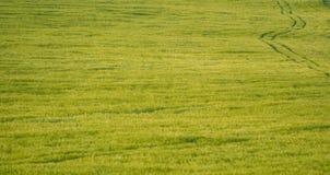 Weizenfelder Lizenzfreie Stockfotos