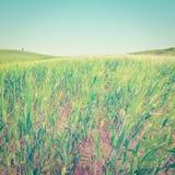 Weizenfelder Stockfotografie
