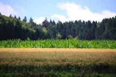 Weizenfelder in den Bergen von Deutschland Stockfotos
